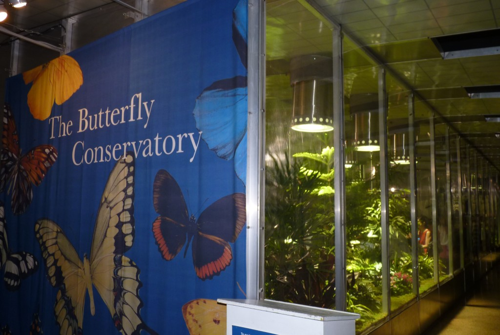Meet a live butterfly - five hundred of them will inhabit this leafy hothouse for much of the year from Sept 5 Sat to next May 29 Sun, offering a chance to inspect some of the 45,000 known butterfly species in all their glory as they flutter about aiming to land on an orange slice or other rotting fruit, their favorite supper